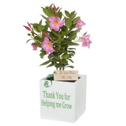 Engraved thank you pot plants