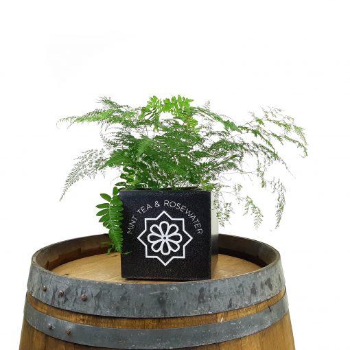 business logo pot plants