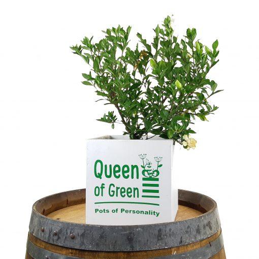 engraved logo pot plants