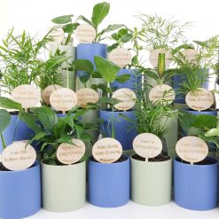 Branded corporate pot plants